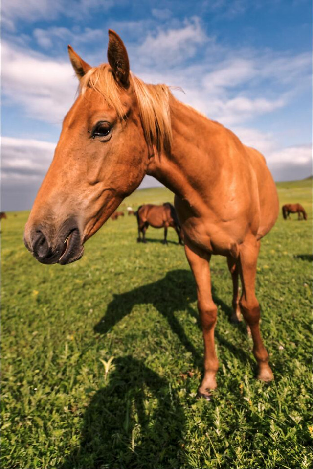 horse-mammal-pasture-farm-hayfield picture material