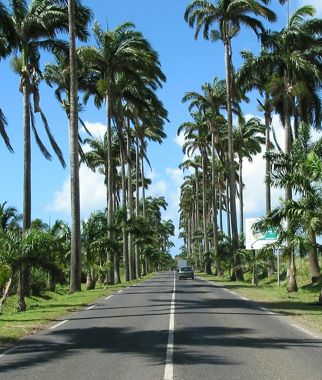 palm-tree-tropical-no-person-travel picture material