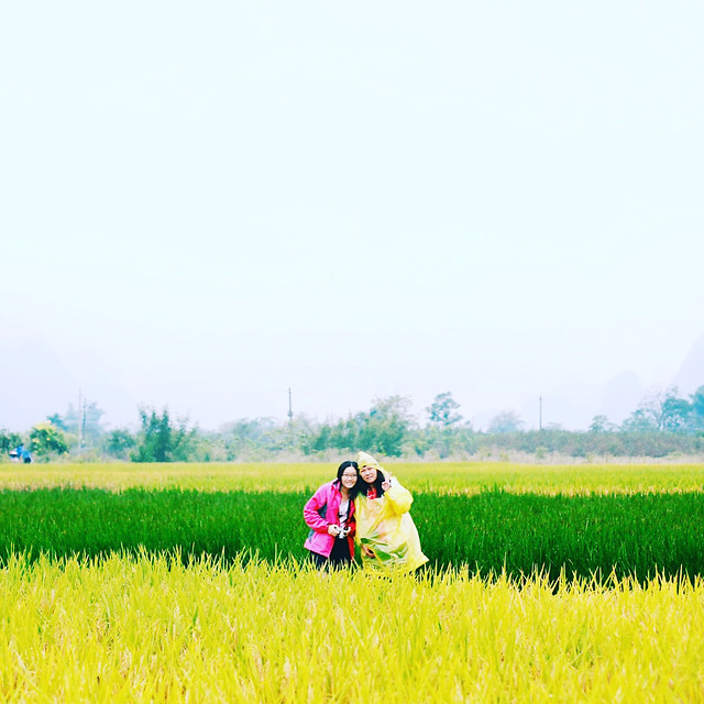 field-grass-nature-landscape-summer picture material