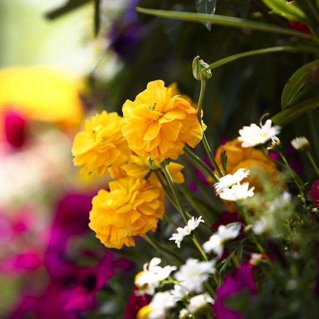 flower-nature-garden-flora-no-person 图片素材