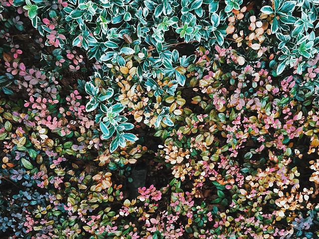 texture-flower-pattern-desktop-decoration picture material