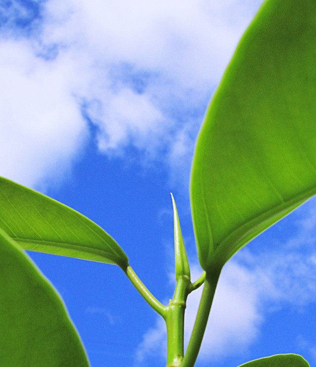 leaf-flora-growth-nature-garden picture material