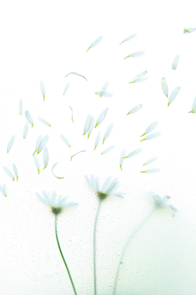 desktop-abstract-flower-nature-white picture material