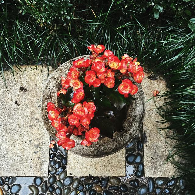 garden-nature-decoration-flower-leaf picture material