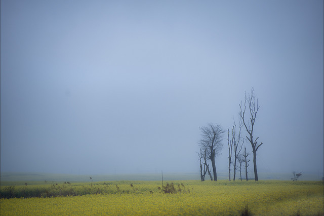 landscape-nature-fog-field-tree picture material