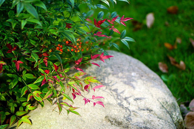 leaf-nature-garden-flora-flower picture material
