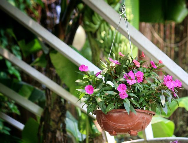 flower-garden-nature-flora-plant picture material