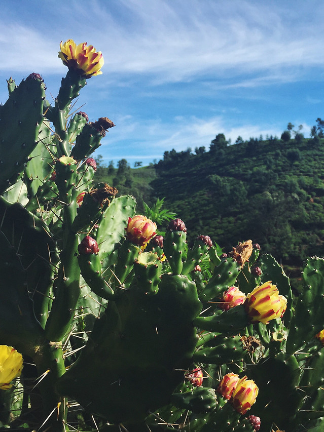 flower-no-person-cactus-plant-outdoors picture material