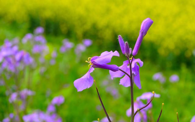 nature-flower-no-person-grass-summer 图片素材