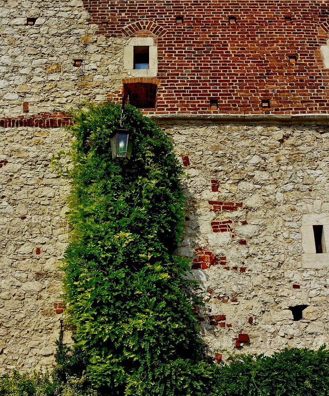 wall-old-architecture-ivy-gothic picture material
