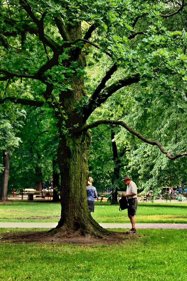 tree-park-leaf-wood-nature 图片素材