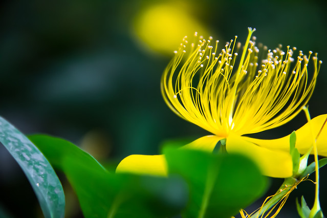 nature-leaf-no-person-flora-flower picture material