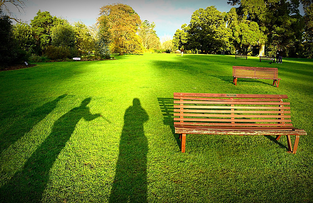 grass-lawn-garden-bench-park picture material