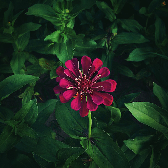 flower-garden-nature-flora-no-person 图片素材