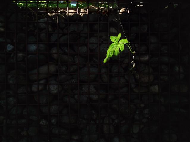 desktop-no-person-wall-dark-green picture material