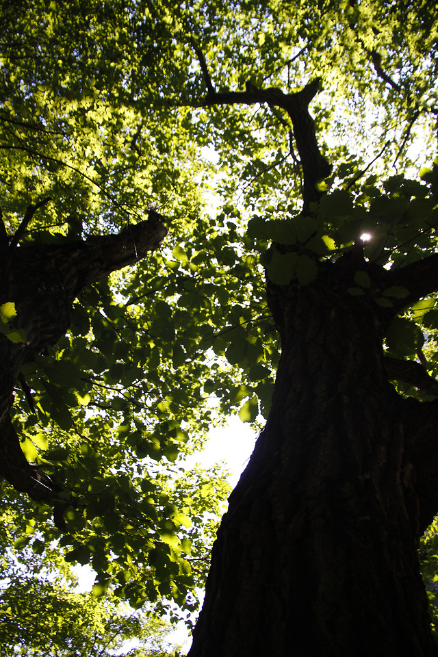 tree-wood-leaf-nature-landscape picture material
