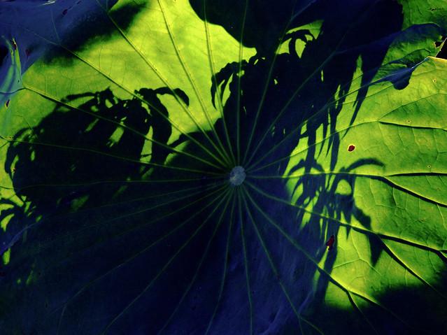 leaf-flora-nature-no-person-garden 图片素材