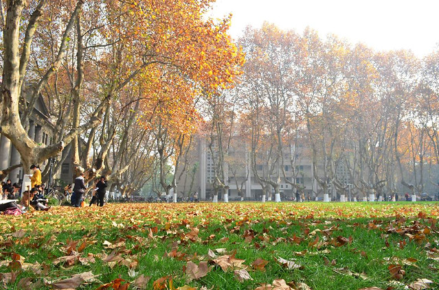 fall-leaf-season-tree-park picture material
