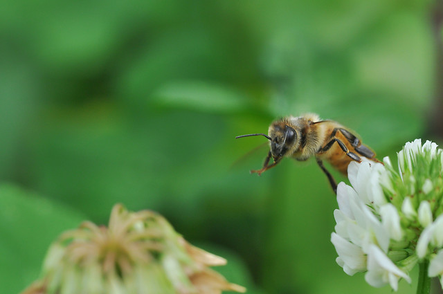 nature-no-person-flower-honey-bee-outdoors picture material