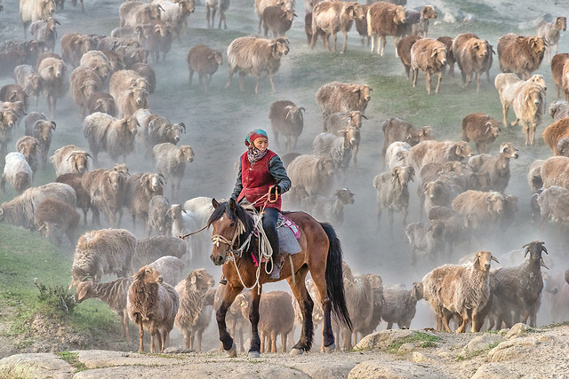 mammal-animal-livestock-herd-rural picture material