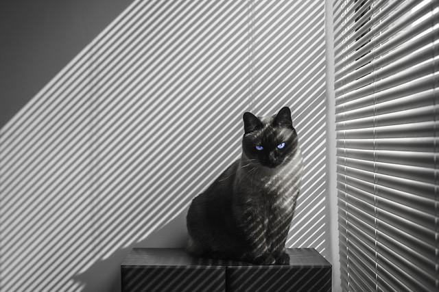 window-no-person-one-black-black-white 图片素材