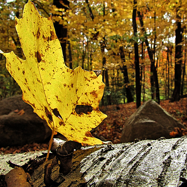 fall-leaf-wood-no-person-nature picture material