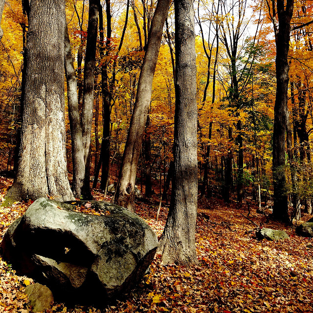fall-wood-tree-leaf-nature picture material