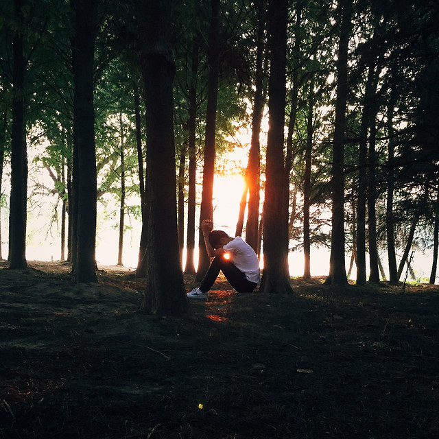 light-dawn-people-tree-sun picture material