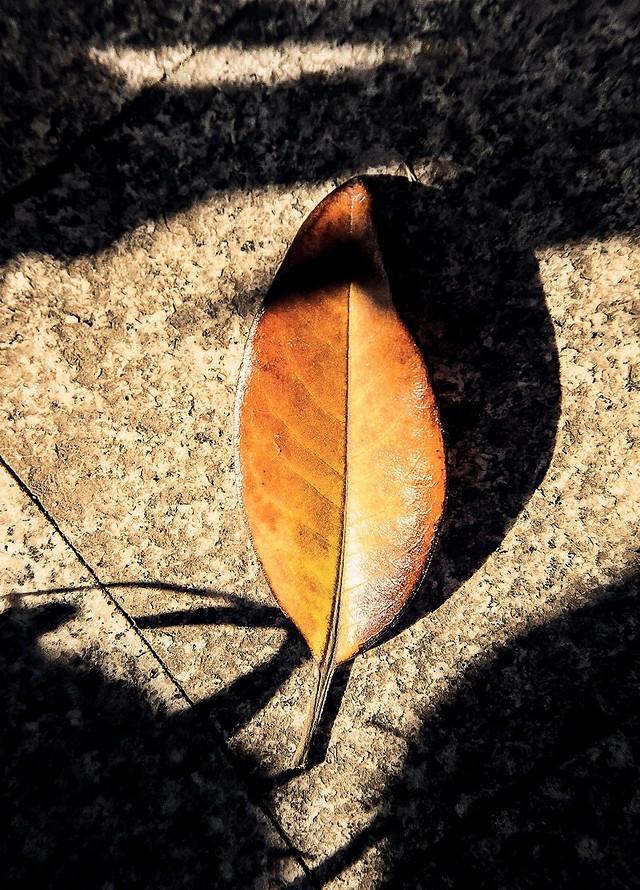 leaf-nature-fall-desktop-wood 图片素材