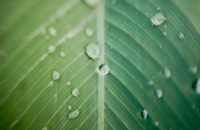 dew-leaf-drop-moisture-waterdrop picture material