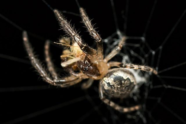 spider-arachnid-insect-invertebrate-spiderweb picture material