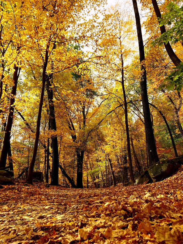 fall-wood-leaf-tree-nature picture material