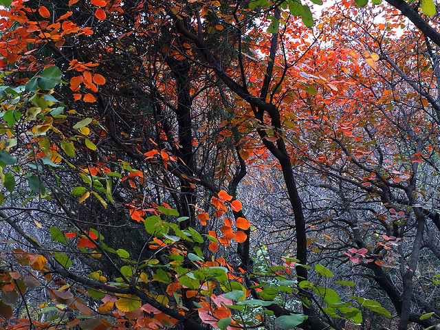 leaf-fall-tree-nature-season picture material