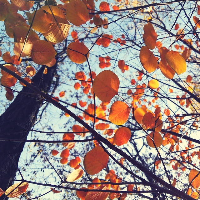 fall-leaf-tree-season-branch 图片素材
