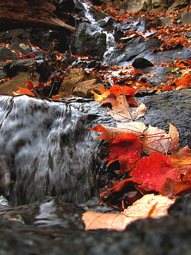 fall-no-person-nature-leaf-water picture material