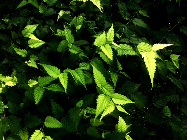 leaf-no-person-nature-lush-flora picture material
