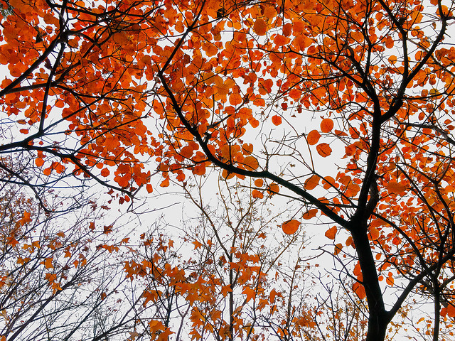 fall-leaf-branch-bright-season picture material