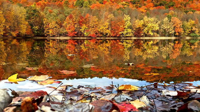 fall-leaf-maple-reflection-water picture material