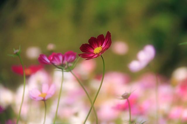 nature-flower-summer-flora-garden 图片素材