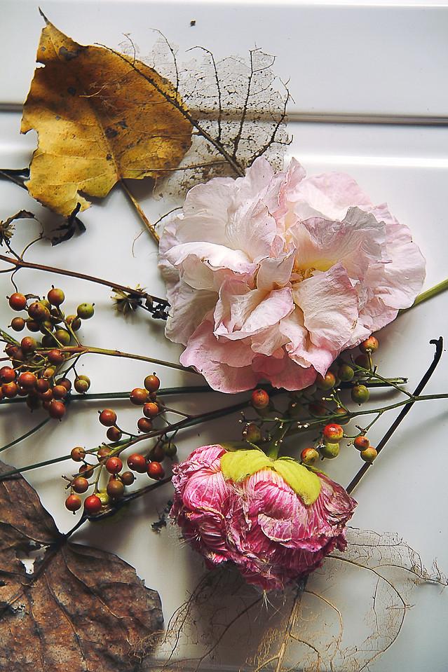 flower-nature-flora-color-leaf picture material