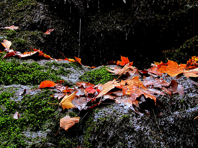 fall-leaf-tree-nature-wood picture material