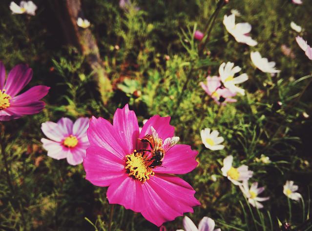flower-nature-summer-garden-no-person 图片素材