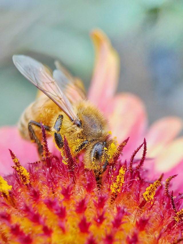nature-bee-insect-flower-no-person picture material