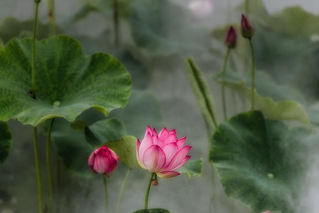 leaf-flora-flower-nature-plant 图片素材
