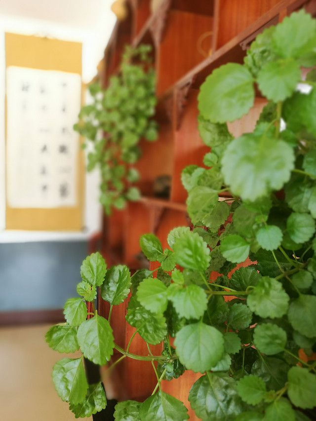 leaf-herb-no-person-food-health picture material