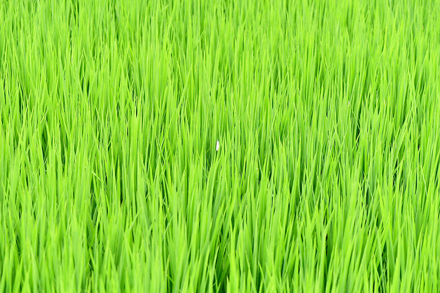 grass-growth-flora-field-lush picture material