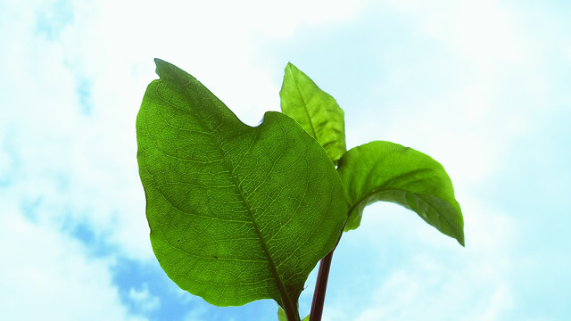 leaf-flora-growth-nature-environment picture material