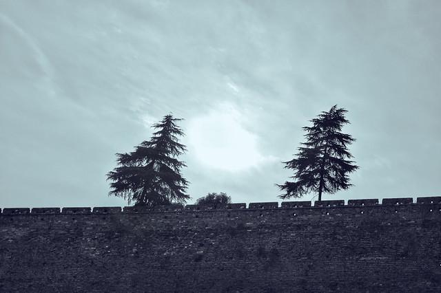 no-person-sky-tree-cloud-landscape picture material