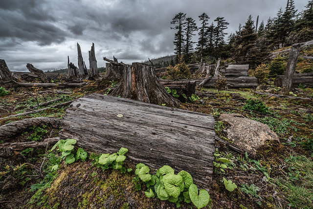 wood-nature-no-person-landscape-tree picture material