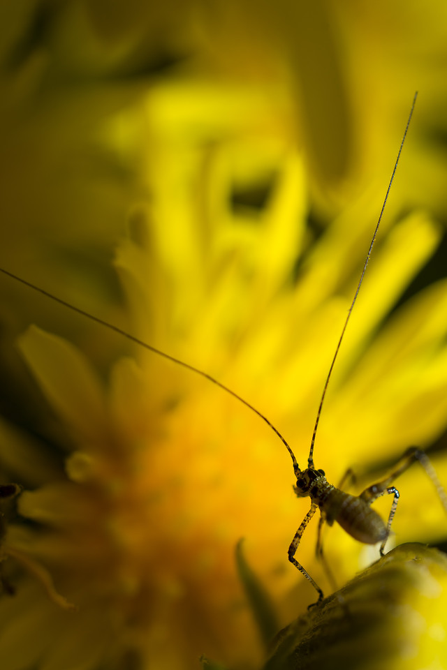 nature-insect-flower-color-yellow 图片素材